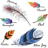 Plumas de pájaro stock de ilustración