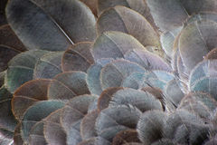 Plumas de pájaro Imagen de archivo libre de regalías