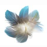 Plumas de pájaro aisladas Fotografía de archivo libre de regalías