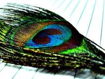Plumas de pavos reales Imagen de archivo libre de regalías