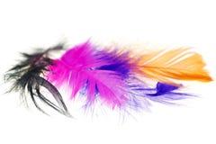 Plumas de pájaro coloridas en los primers de un fondo del blanco Fotos de archivo libres de regalías