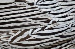 Plumas de plata del faisán Imagenes de archivo
