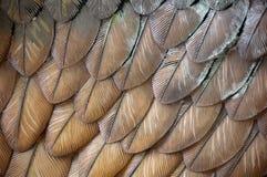 Plumas del águila Fotografía de archivo
