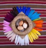 3 plumas del arco iris de la cesta de los huevos Fotos de archivo libres de regalías