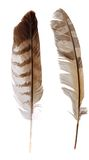 Plumas del buho y del halcón fotos de archivo