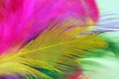 Plumas del color Fotos de archivo