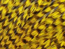 Plumas del gallo de la selva Foto de archivo libre de regalías