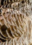 Plumas del ganso Fotografía de archivo