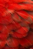 Plumas del loro Fotos de archivo libres de regalías