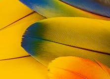 Plumas del loro del Macaw Fotografía de archivo