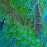 Plumas del Macaw del arlequín Fotos de archivo libres de regalías