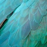 Plumas del Macaw del azul y del oro Foto de archivo