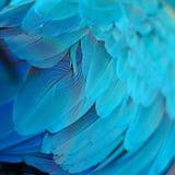 Plumas del Macaw del azul y del oro Imagen de archivo