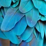 Plumas del Macaw del azul y del oro Imagenes de archivo