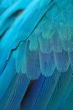 Plumas del Macaw del azul y del oro Imagen de archivo libre de regalías