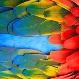 Plumas del Macaw del escarlata Fotografía de archivo libre de regalías