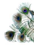 Plumas del pavo real Imagen de archivo
