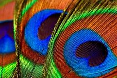 Plumas del pavo real Fotos de archivo