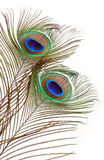 Plumas del pavo real Fotos de archivo libres de regalías