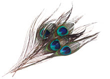Plumas del pavo real en el fondo blanco Fotografía de archivo libre de regalías