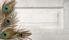 Plumas del pavo real en puerta de la vendimia Imagen de archivo libre de regalías
