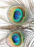 Plumas del pavo real o de la pava real Fotografía de archivo libre de regalías
