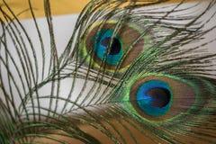 Plumas del pavo real que miran fijamente a la derecha fotografía de archivo