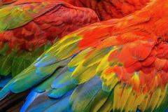 Plumas del ` s del pájaro Imagen de archivo libre de regalías