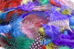 Plumas del ` s del pájaro Fotografía de archivo