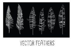 Plumas del vector Fotografía de archivo libre de regalías