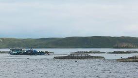 Plumas e instalaciones de color salmón del servicio en el puerto del macquarie, Tasmania almacen de video