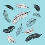 Plumas fijadas Fotografía de archivo libre de regalías