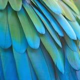 Plumas Greenwinged del Macaw Fotografía de archivo