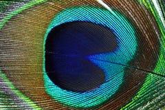 Plumas hermosas del pavo real como fondo Foto de archivo libre de regalías