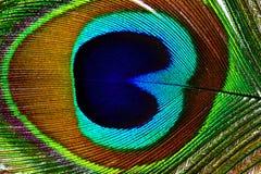 Plumas hermosas del pavo real como fondo Foto de archivo