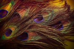Plumas hermosas del pavo real de la pendiente Fotos de archivo libres de regalías