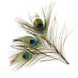 Plumas hermosas del pavo real en el fondo blanco Foto de archivo libre de regalías