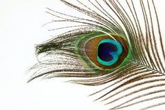 Plumas hermosas del pavo real en el fondo blanco Imagen de archivo libre de regalías