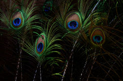 Plumas hermosas del pavo real Fondo de la pluma de pájaro Fotografía de archivo
