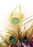 Plumas hermosas del pavo real Fondo de la pluma de pájaro Imagen de archivo libre de regalías