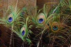 Plumas hermosas del pavo real Fondo de la pluma de pájaro Imagen de archivo