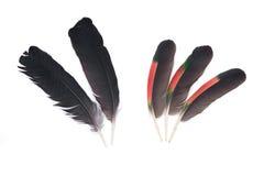 Plumas negras del cuervo y del loro del Amazonas imagenes de archivo