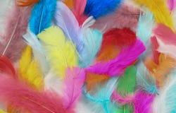 Plumas pintadas Fotografía de archivo