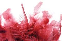 Plumas rojas Imágenes de archivo libres de regalías