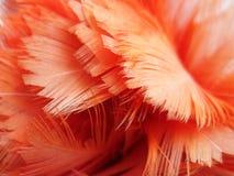 Plumas rojas Foto de archivo libre de regalías