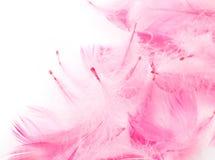 Plumas rosadas Fotos de archivo