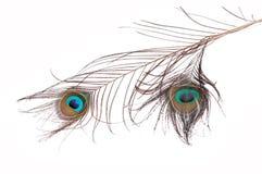 Plumas sagradas del pavo real Imágenes de archivo libres de regalías