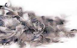 Plumas suaves aisladas Fotografía de archivo