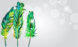 Plumas verdes stock de ilustración