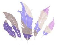 Plumas violetas Imágenes de archivo libres de regalías